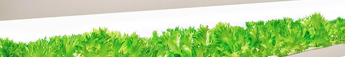 Ghid de iluminare cu LED-uri pentru cresterea plantelor (horticultura & acvaristica)