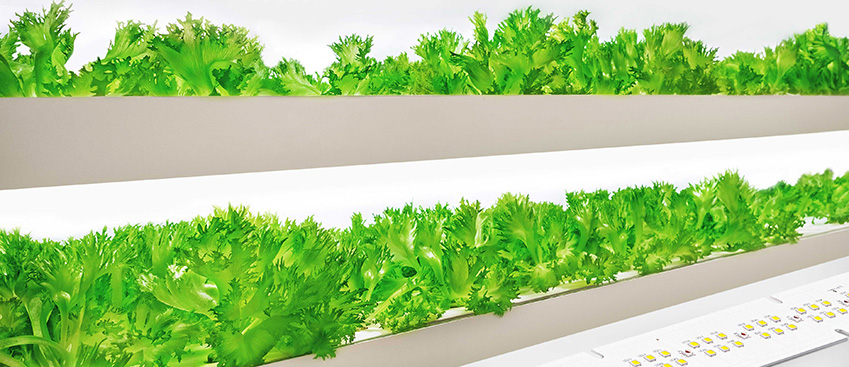 Light for plant growth