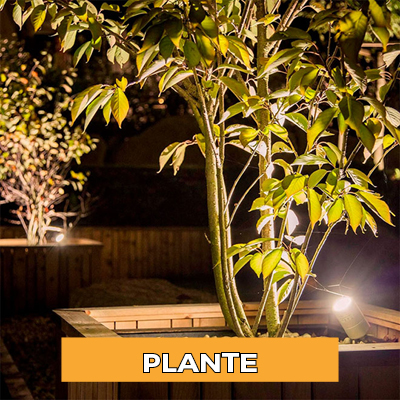 Iluminat Plante