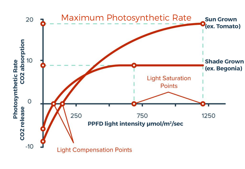 A suitable light intensity for a horticulture installation should be chosen between the compensation and saturation points of plants that are grown