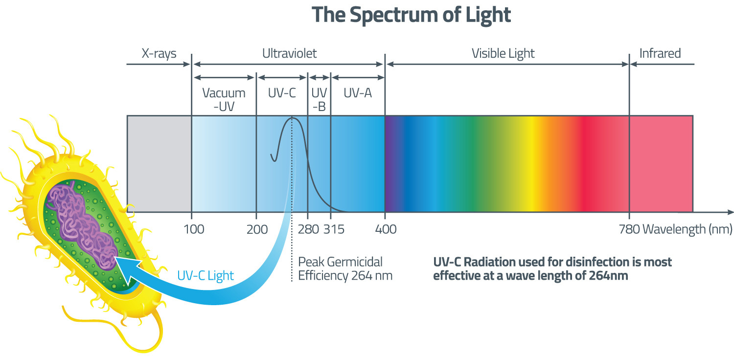 UV radiation spectrum UVA, UVB and UVC