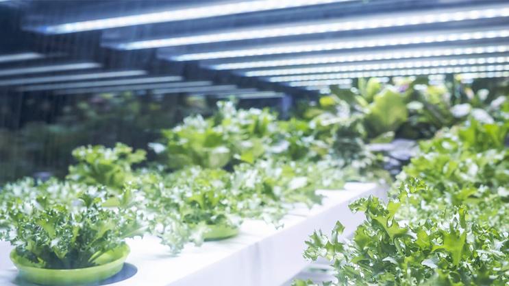 Lumina alba speciala pentru cresterea plantelor
